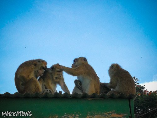 Lake Agco + New Israel Monkey | by Mark Atong