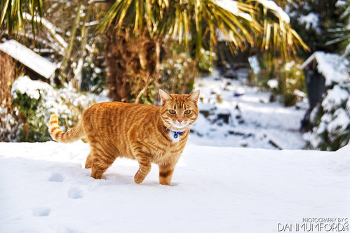 Henry  in the snow - 'Beast from the East' | by Dan Mumford