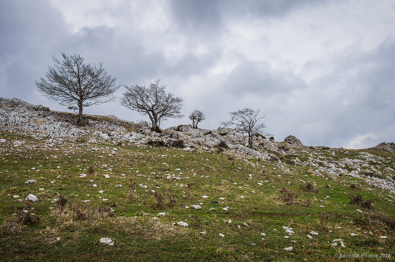 Árboles en las crestas de Ollide