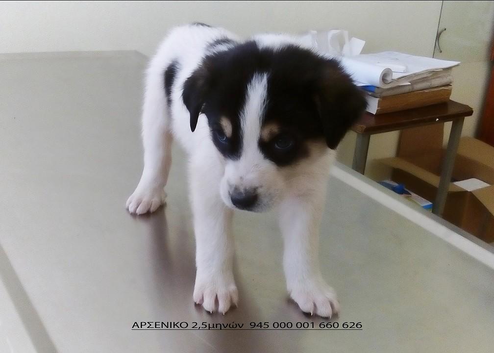 Αδέσποτα σκυλιά για υιοθεσία από το Καταφύγιο Αδέσποτων Ζώων Ιωαννίνων