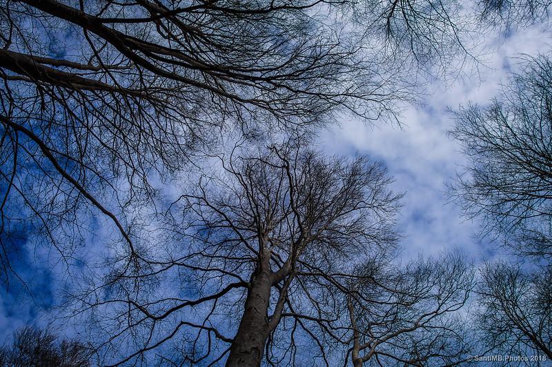 Hayedo de Passavets en invierno