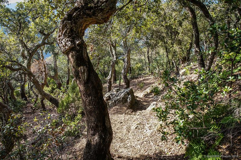 Bajando del Castell de Montsoriu por la falda sur