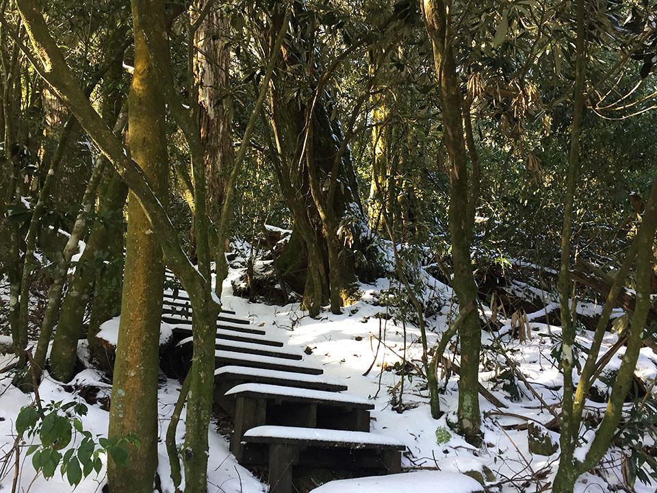 黑森林步道 - 難得一見之冬景