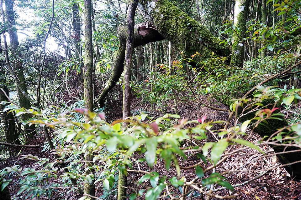 幽靜的森林秘境保存了最原始的自然風貌