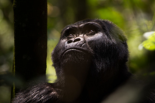 USAID Measuring Impact Conservation Enterprise Retrospective (Uganda; International Gorilla Conservation Program) | by USAID Biodiversity & Forestry