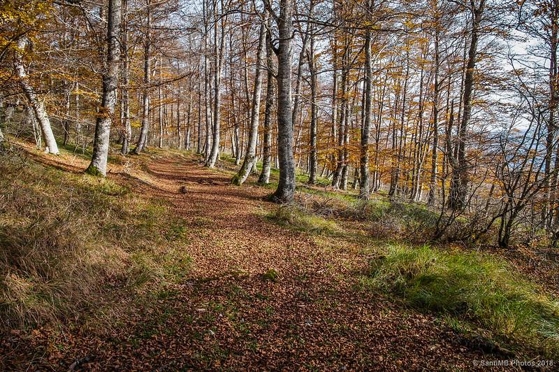 Por el bosque de Olaberta
