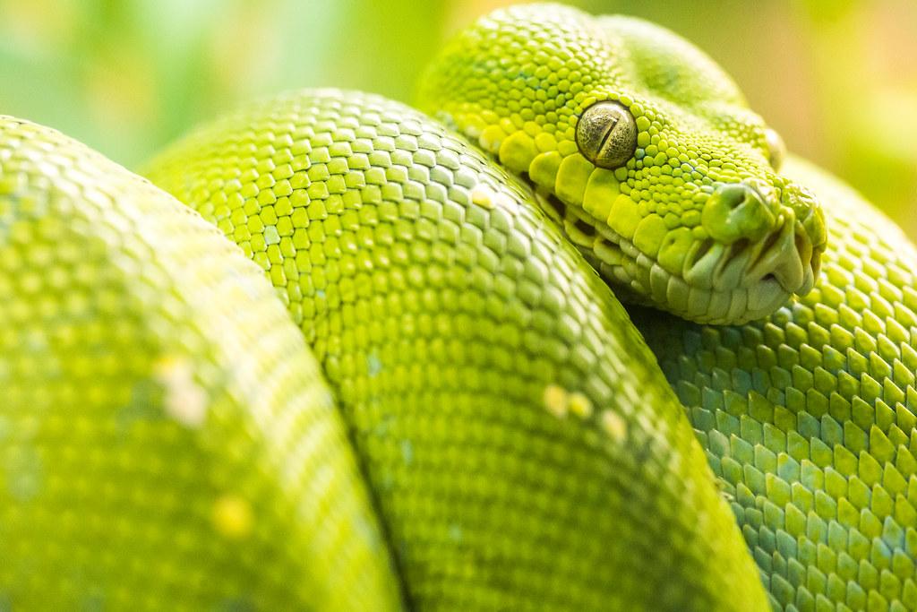 snake eyes thomas hawk flickr