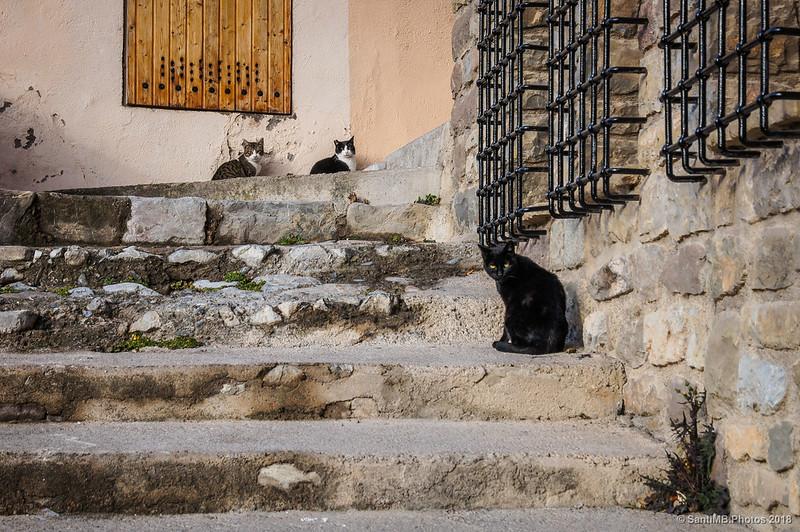 Gatos de Bagà