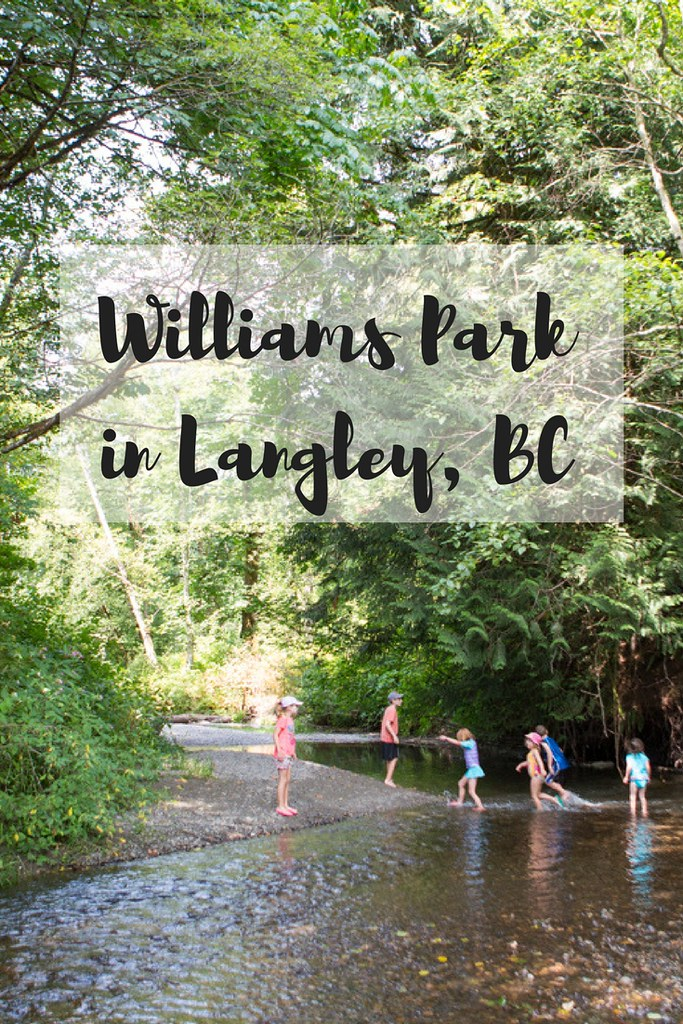The beauty of Williams Park in any season in Langley BC. A great family-friendly walk for all ages.