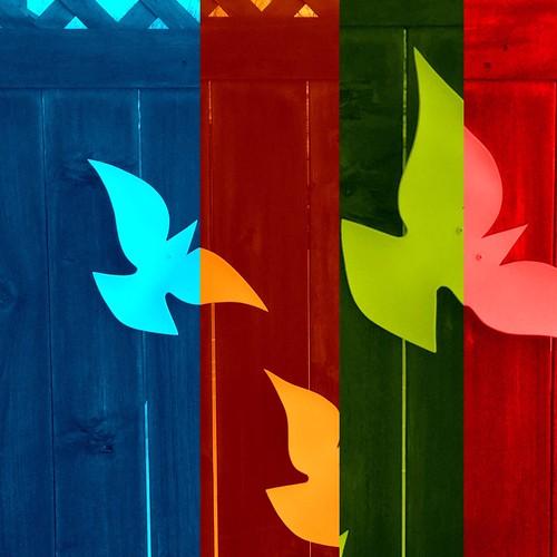 creativity Devastated Doves #doves #birds...