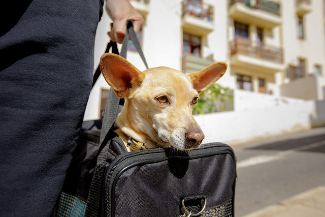 Koirakuriiri palveluksessanne!