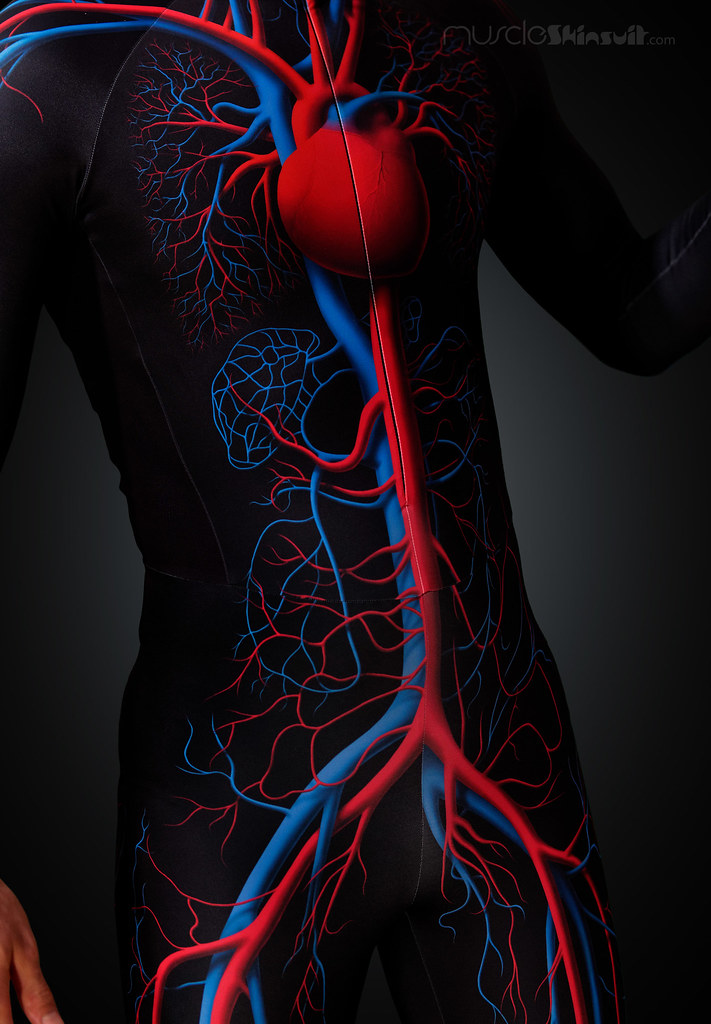 Human Anatomy And Circulatory System From Muscleskinsuit Flickr