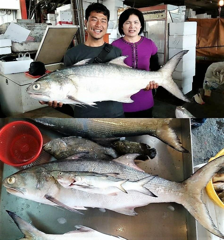 超過10公斤以上的大午魚(四指馬鮁),過年品嘗正當旬!圖片來源:白尚儒。