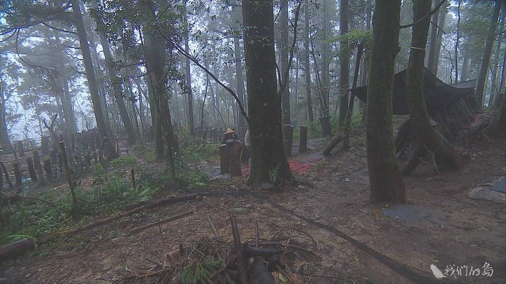 941-2-40呂崇維在泰平里山頭家族土地,種下四十五公頃的樹。並利用疏伐下來的木頭,種植段木香菇。