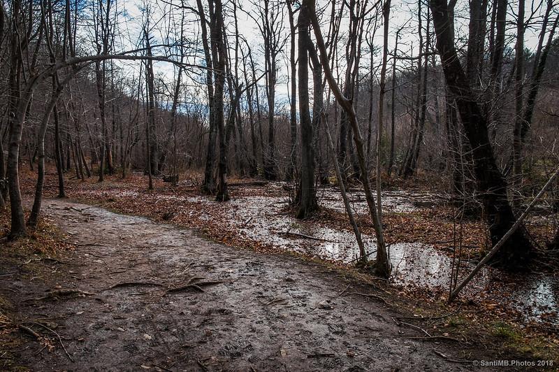 Camino hacia el Pantano de Santa Fe de Montseny