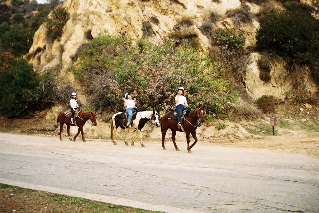 Horseygirls