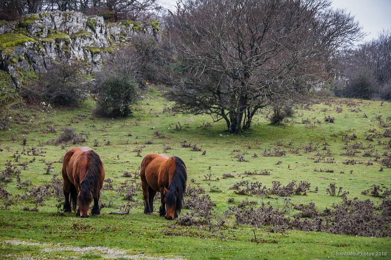 Caballos en la Senda del Pastoreo