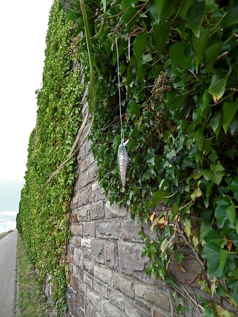 Ein Stück Angelschnur mit einem Blinker hängt im Efeu an der Ufermauer am Rhein in Koblenz-Ehrenbreitstein