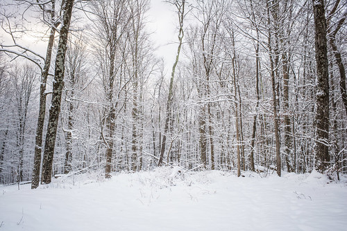 Snowy Woods | by goingslowly