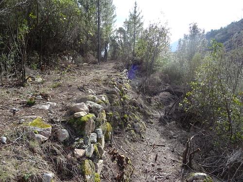 Le Chemin d'exploitation du Carciara en RG de la Figa Bona : à l'embranchement avec le sentier de carbunara