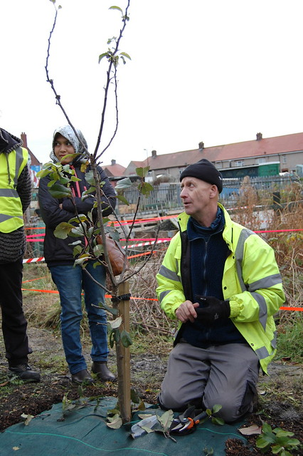 Tree pruning in Sunderland