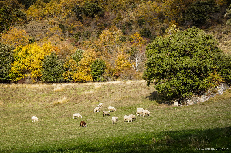 Rebaño de ovejas cerca de Baquedano