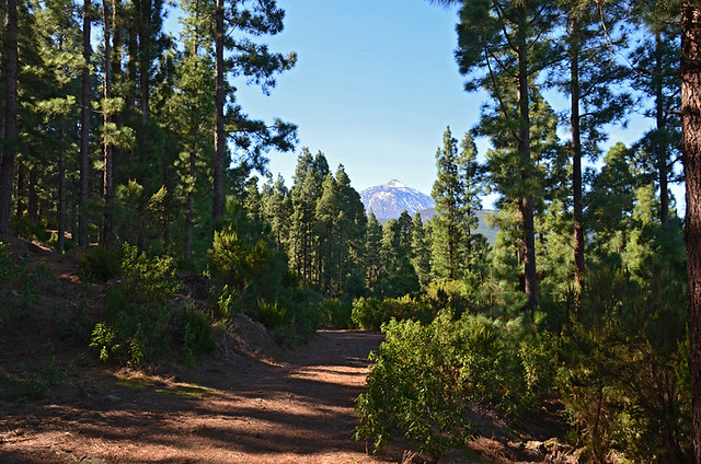 Teide from Orotava Valley, Tenerife
