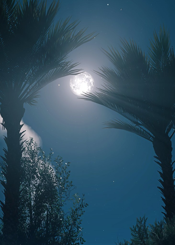 """""""Palm Trees At Night"""" 