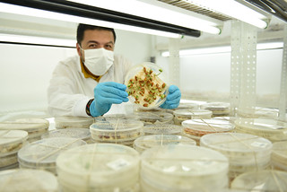 NP-genebank42 | by CIAT International Center for Tropical Agriculture