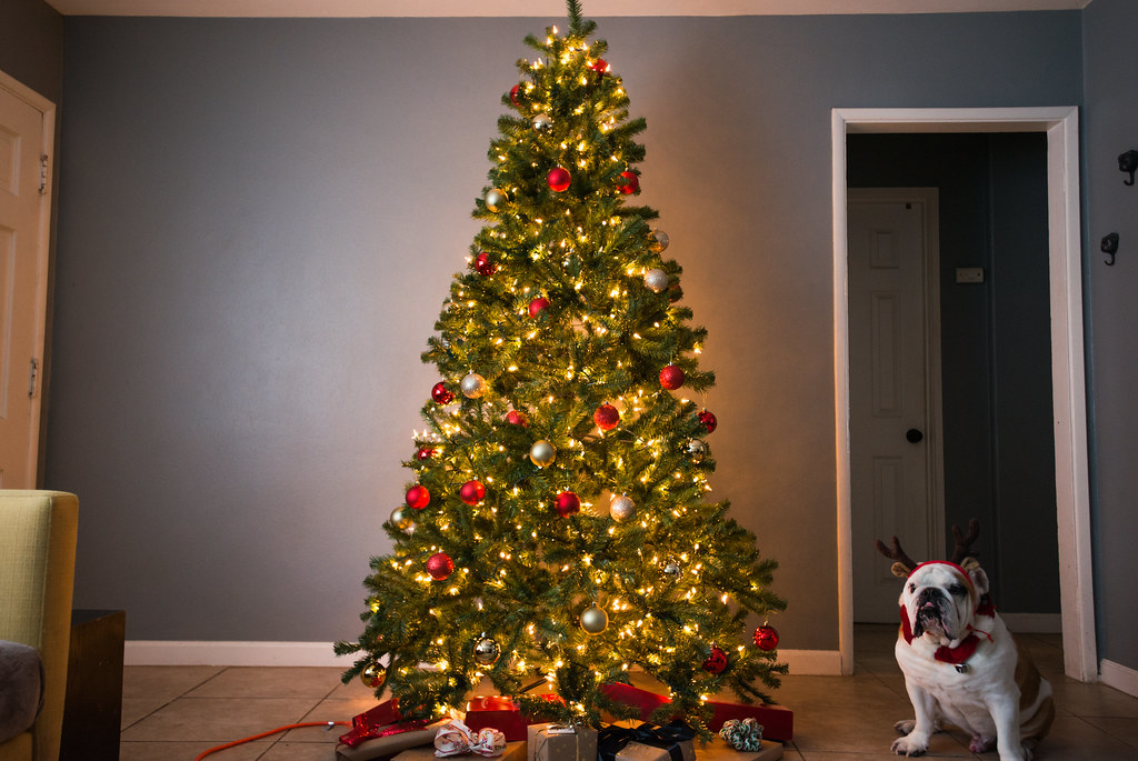 ... Decorated artificial Christmas tree with dog beside it | by yourbestdigs - Decorated Artificial Christmas Tree With Dog Beside It Flickr