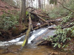 East Jones Creek Falls - Upper Cascade