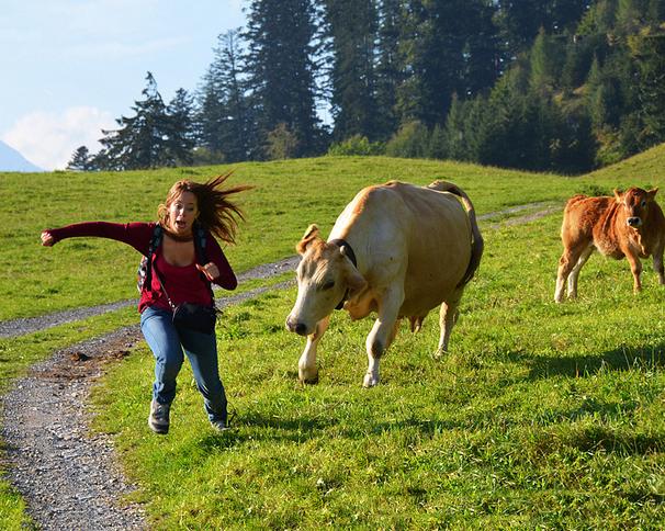 Mi hermana corriendo con una vaca detrás de ella