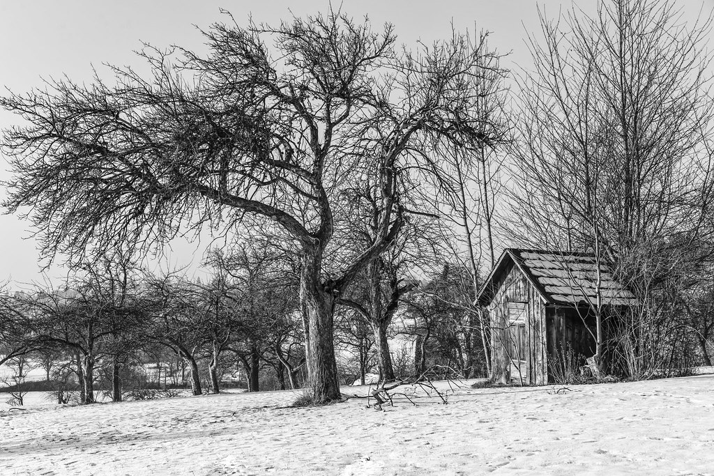 Small Wooden Hut   By Freiraum7 Small Wooden Hut   By Freiraum7
