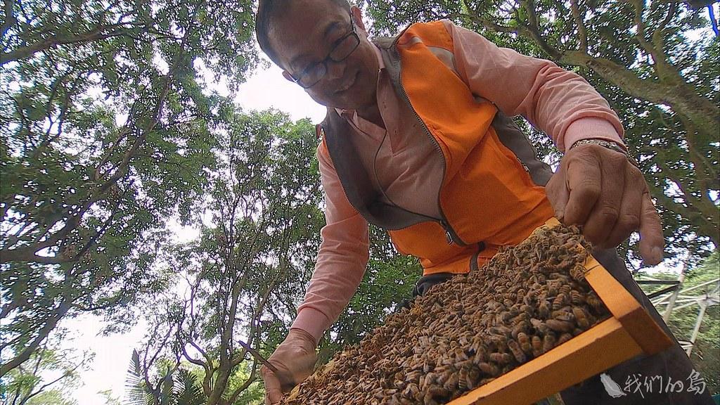 處理蜂類,資深蜂農是現成達人。