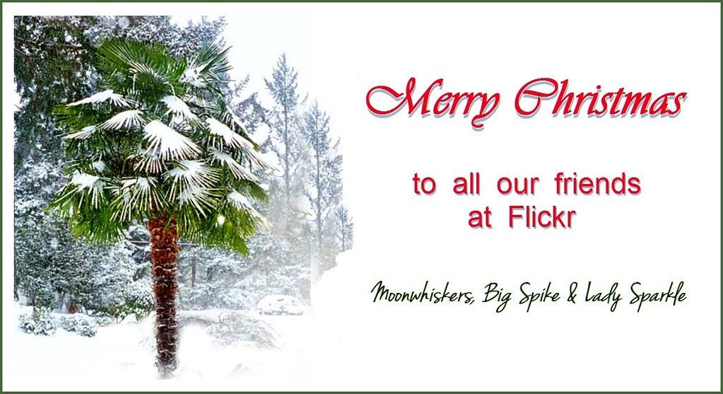 Christmas greeting wishing everyone a wonderful peaceful flickr christmas greeting by cats by moonwhiskers m4hsunfo