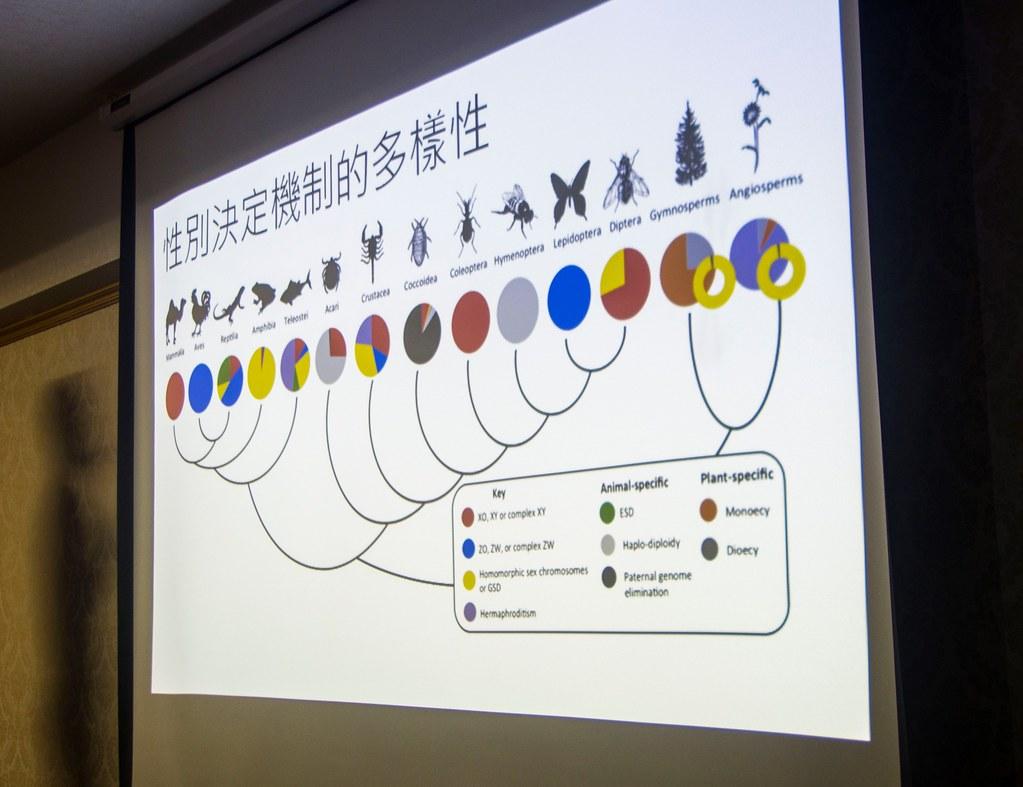 每個生物類型都有各自的性別決定機制。攝影:陳其暐。