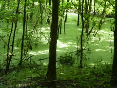 Trees in green water