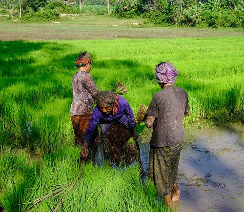 People working on rice field in Vietnam | by phuong.sg@gmail.com
