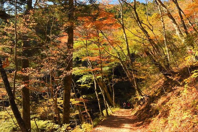 東京・奥多摩 紅葉登山