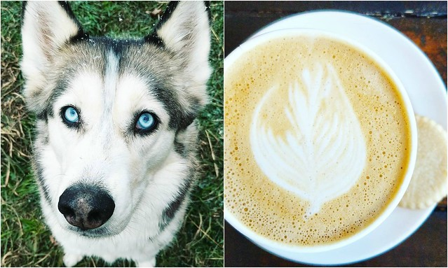 Husky with snowflakes; latte art and a cookie