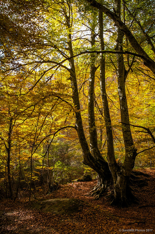 Árbol en el bosque del Nacedero del Urederra