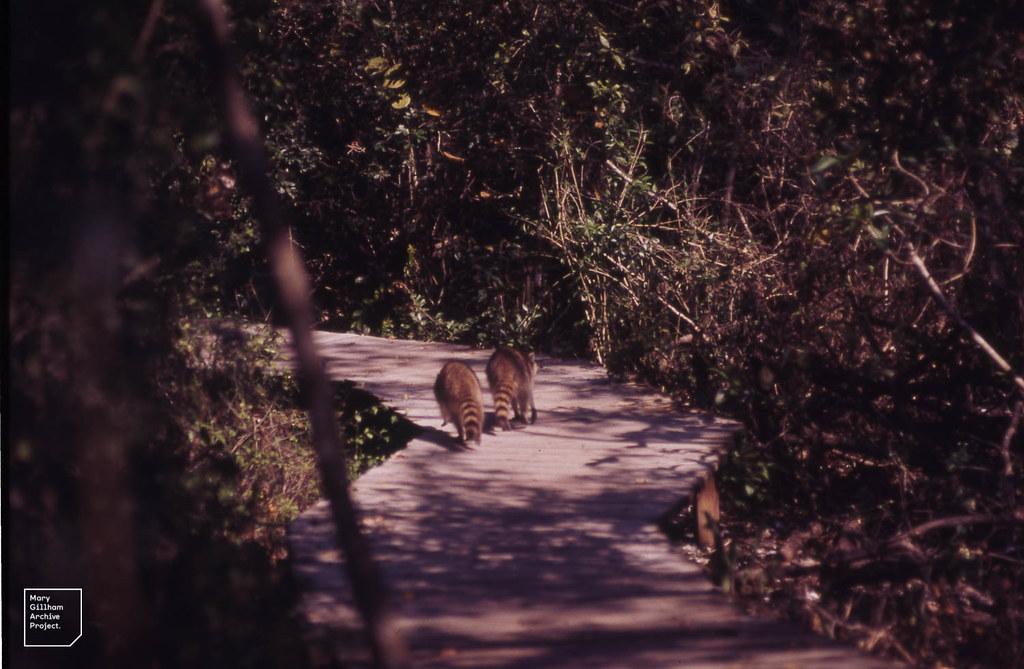 Sanibel Island Everglades Tour