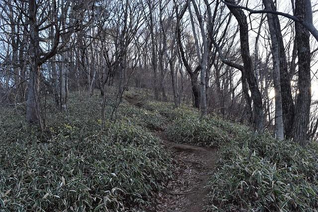 高川山 日帰り登山