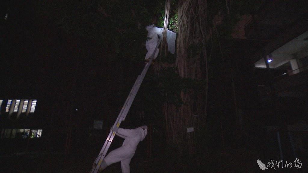 934-1-19穿上捕蜂衣,層層防護,白天勘查地形,入夜後趁蜂群回巢,消防局人員正式動手處裡蜂巢。