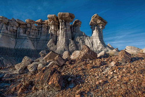 Petrified Forest National Park | Tumbling wood in Devil's ...
