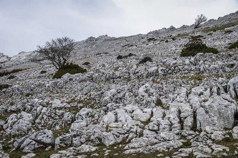 Árboles sobre la roca en la Sierra de Andía