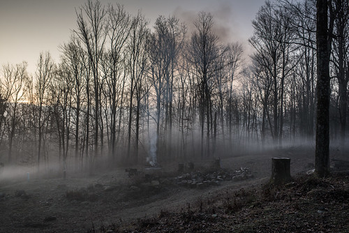 Misty, Grey, Leafless Woodland Homestead with Smoke from Fire | by goingslowly