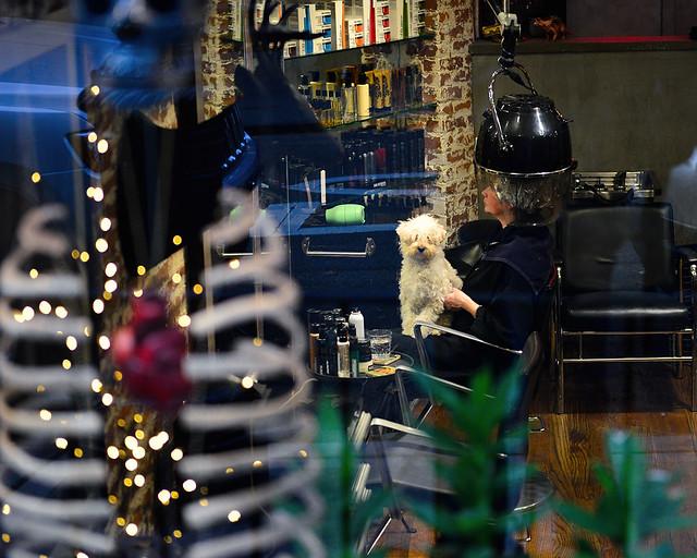 Perro en una peluquería de Greenwich Village