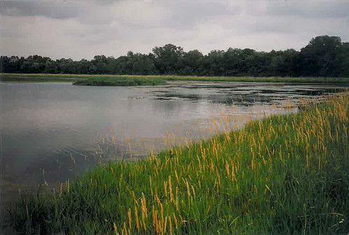 After photo of a wetland