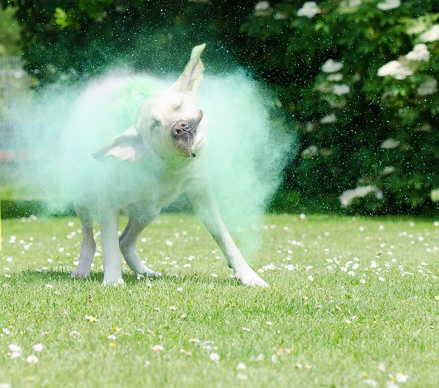 How to Keep Your Pets Safe from Color this Holi